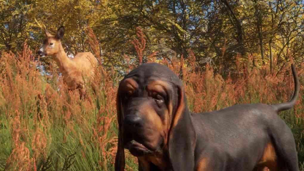 thehunter cotw bloodhound fix